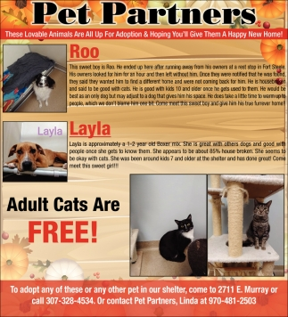 Animals are All up for Adoption