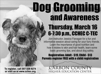 Dog Grooming and Awareness